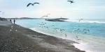 QL19-Rakaia-Birds.jpg
