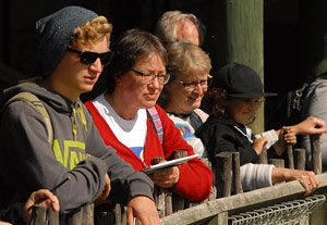 People watching chimpanzees at Wellington Zoo.